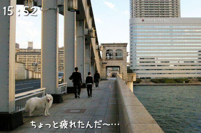 冒険散歩~行きはヨイヨイ編~_c0062832_16511584.jpg