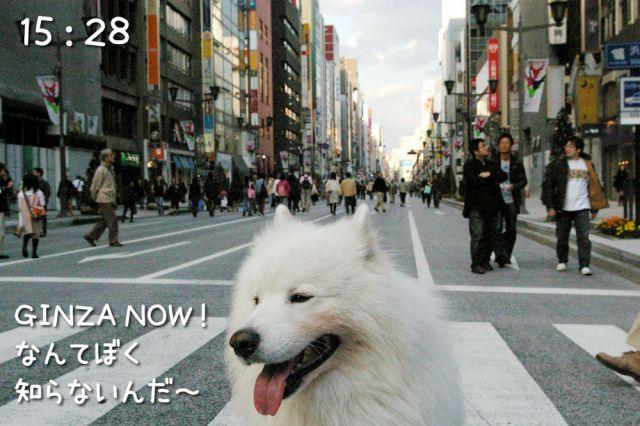 冒険散歩~行きはヨイヨイ編~_c0062832_1651246.jpg