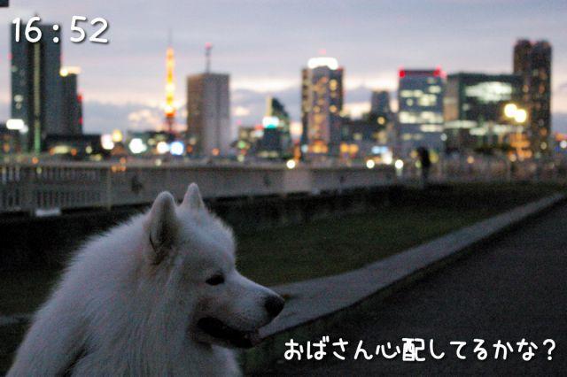 冒険散歩~行きはヨイヨイ編~_c0062832_16523351.jpg