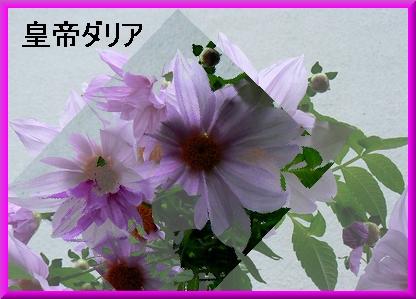f0031546_2184083.jpg
