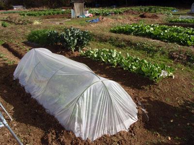 農園便り・記録_c0063348_2162721.jpg