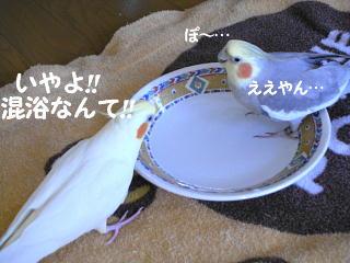 f0132055_1844318.jpg