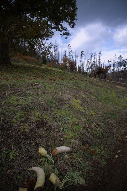 余市・小樽撮影行3 大きな栗の木の下で_f0042194_052512.jpg