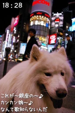 冒険散歩~帰りもヨイヨイ編~_c0062832_16473757.jpg