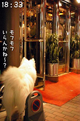 冒険散歩~帰りもヨイヨイ編~_c0062832_16474971.jpg