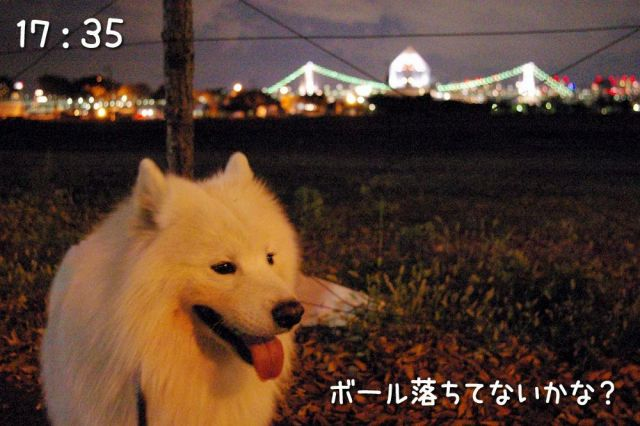 冒険散歩~帰りもヨイヨイ編~_c0062832_1647695.jpg