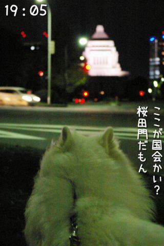 冒険散歩~帰りもヨイヨイ編~_c0062832_16482361.jpg