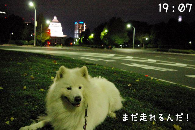 冒険散歩~帰りもヨイヨイ編~_c0062832_16483353.jpg