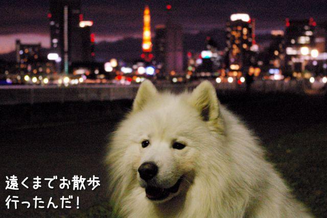 冒険散歩~帰りもヨイヨイ編~_c0062832_1648565.jpg