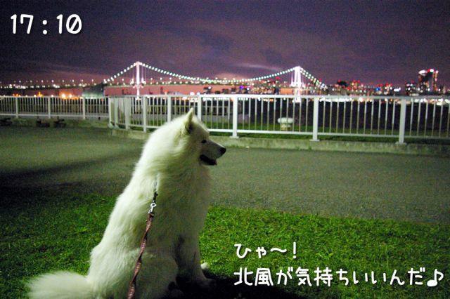 冒険散歩~帰りもヨイヨイ編~_c0062832_16511640.jpg