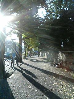 散歩道_a0103940_343543.jpg