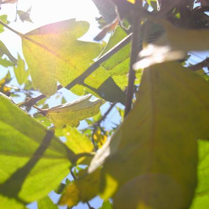 太陽の恵み_d0113340_22452323.jpg