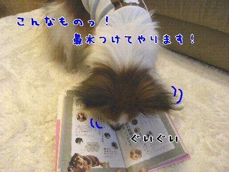 d0013149_22583271.jpg