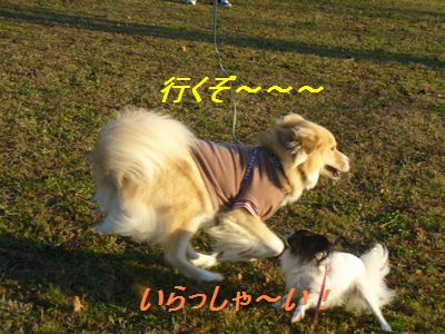 a0100160_20112051.jpg