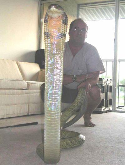 ★毒ヘビに44回噛まれたコブラマン、「最悪」の被害に(゚ロ゚;)_a0028694_10334684.jpg