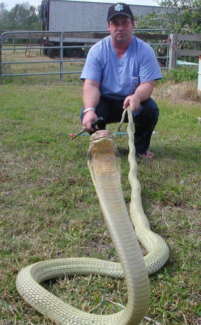 ★毒ヘビに44回噛まれたコブラマン、「最悪」の被害に(゚ロ゚;)_a0028694_10345750.jpg