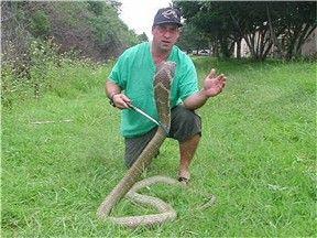 ★毒ヘビに44回噛まれたコブラマン、「最悪」の被害に(゚ロ゚;)_a0028694_1036516.jpg