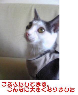 b0022595_1248458.jpg