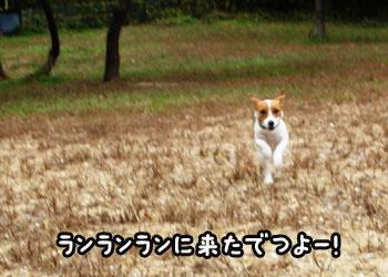 f0129214_14502188.jpg