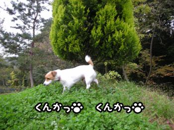 f0129214_14503927.jpg