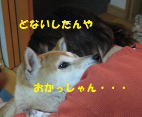 c0049950_11595099.jpg