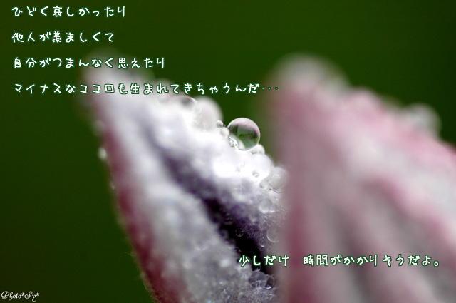 c0144353_1326402.jpg
