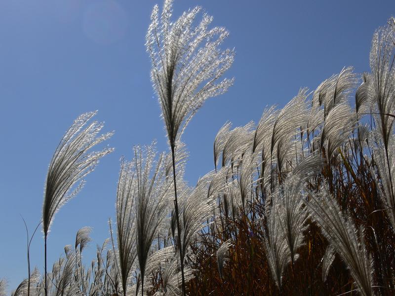秋風を撮影してきました。_c0059854_2385027.jpg