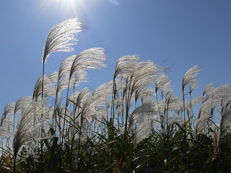 秋風を撮影してきました。_c0059854_2394323.jpg
