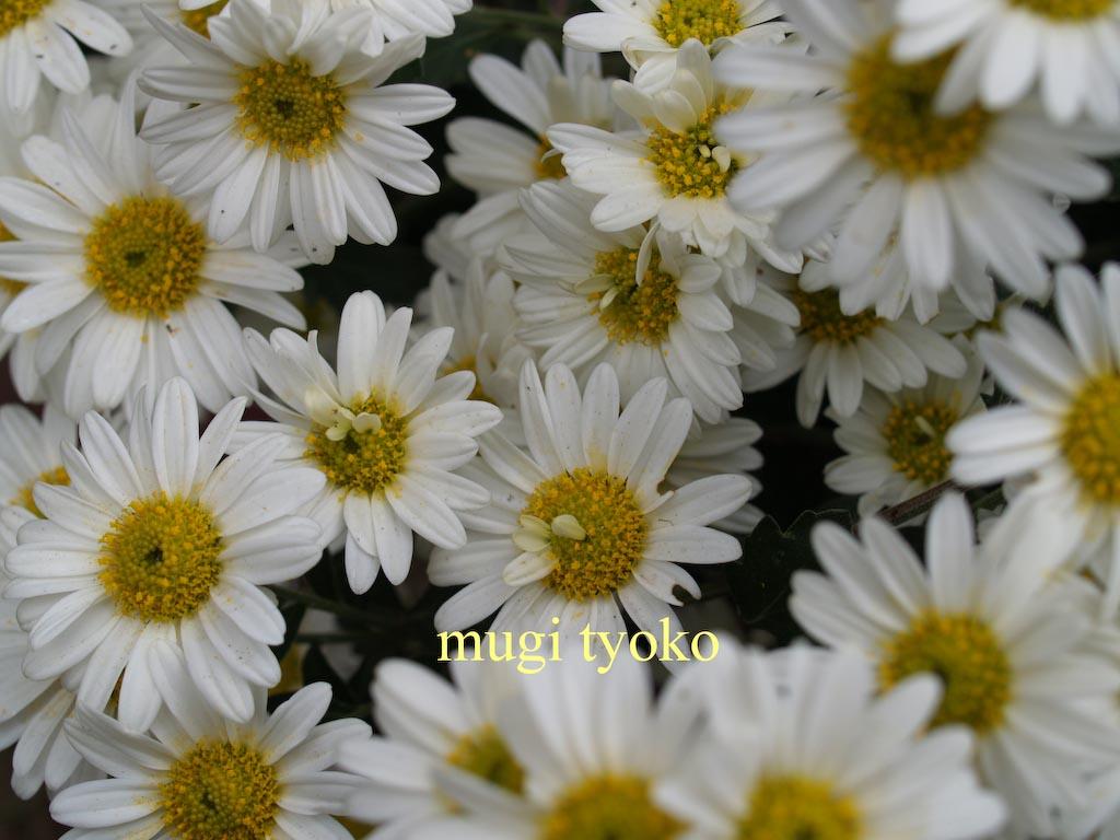 f0146004_10403133.jpg