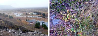 アイスランドの環境対策等、総合案内_c0003620_2245735.jpg