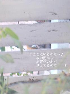 f0042135_230262.jpg