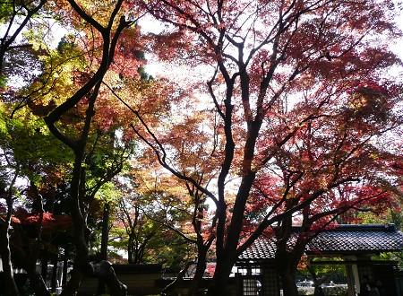 京の紅葉を訪ねて vol.4 しょうざん光悦芸術村_c0057946_18471788.jpg