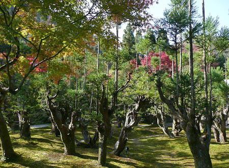 京の紅葉を訪ねて vol.4 しょうざん光悦芸術村_c0057946_18475362.jpg