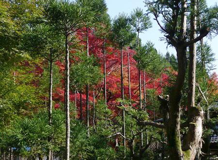 京の紅葉を訪ねて vol.4 しょうざん光悦芸術村_c0057946_18481635.jpg