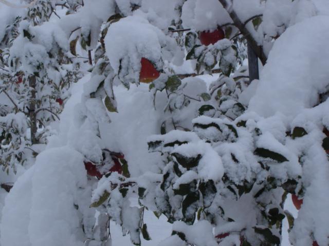 どっか~んと大雪。_e0019167_10393184.jpg