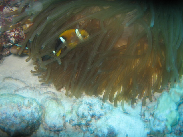 マジェロ(マーシャル環礁)を潜ること_d0102413_18452642.jpg
