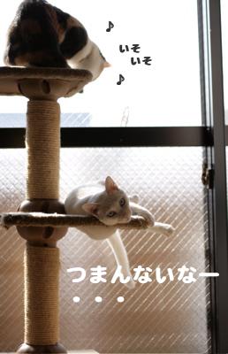 f0073833_15344211.jpg