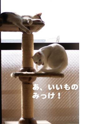 f0073833_15345192.jpg