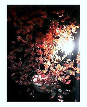 「秋」が届きました!_a0083140_724883.jpg