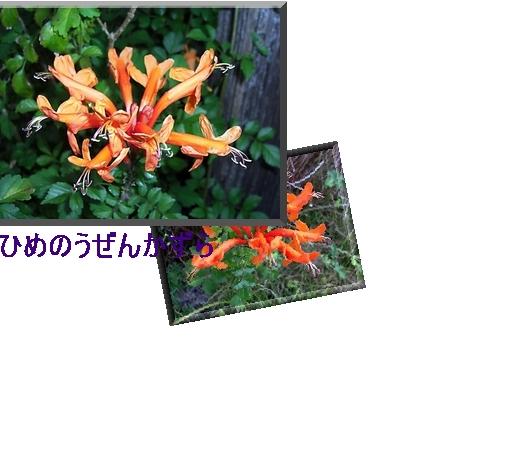 f0031546_22114732.jpg