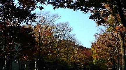 秋晴れ♪_b0032617_14333632.jpg