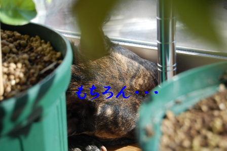 c0130324_08943.jpg
