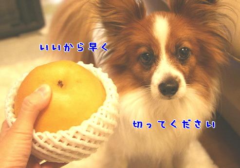 d0013149_0111083.jpg