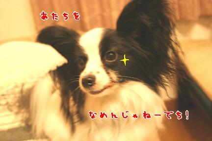 d0013149_024112.jpg