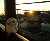 今日も陽が昇る_f0139963_6571646.jpg