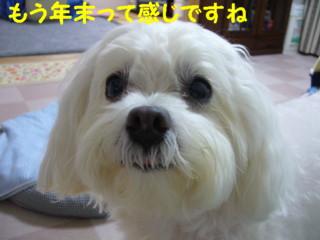 f0145192_14505132.jpg