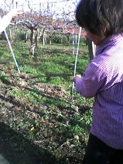 獣害、イノシシによる梨畑など農作物の被害を見る_e0068696_1049148.jpg