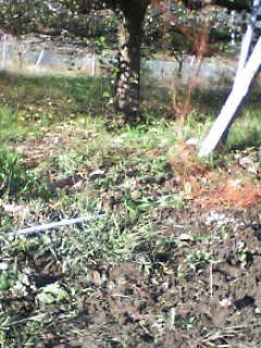 獣害、イノシシによる梨畑など農作物の被害を見る_e0068696_10493463.jpg