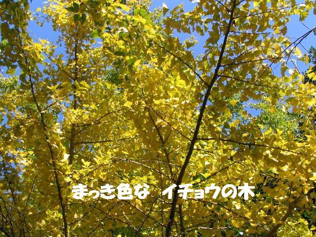 d0081210_1712169.jpg