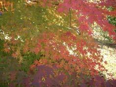 紅葉狩り_f0129726_229991.jpg